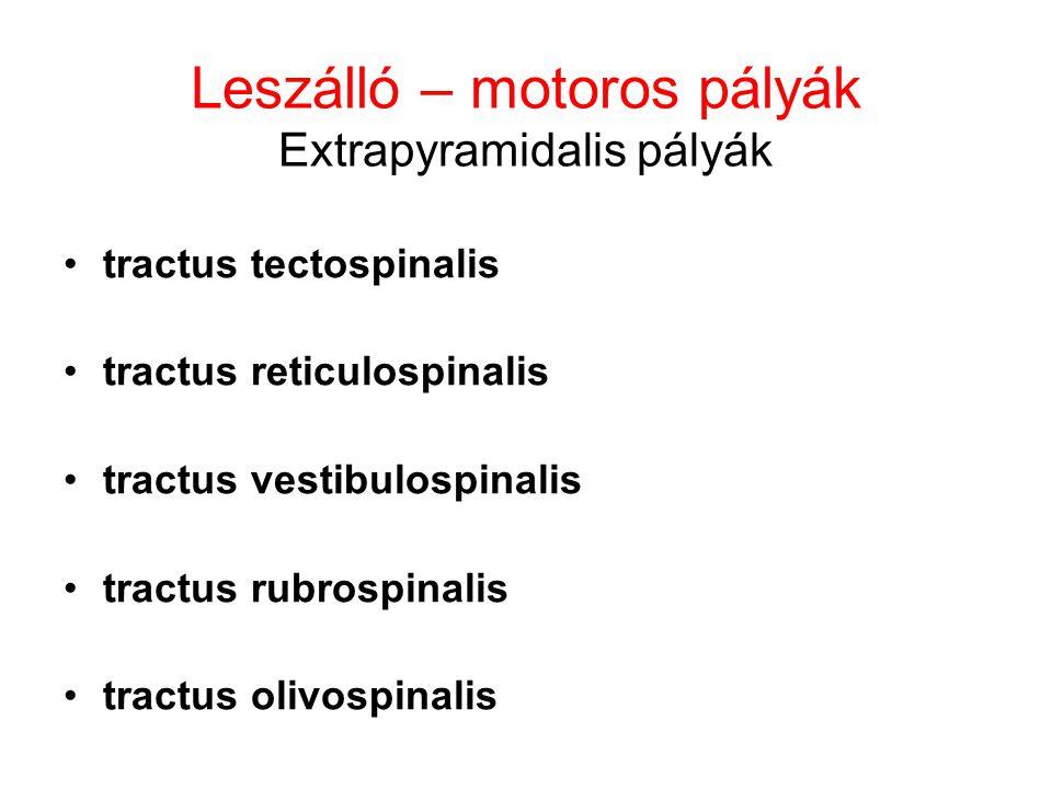 Leszálló – motoros pályák Extrapyramidalis pályák