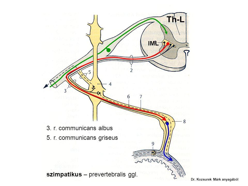 Th-L IML 3. r. communicans albus 5. r. communicans griseus