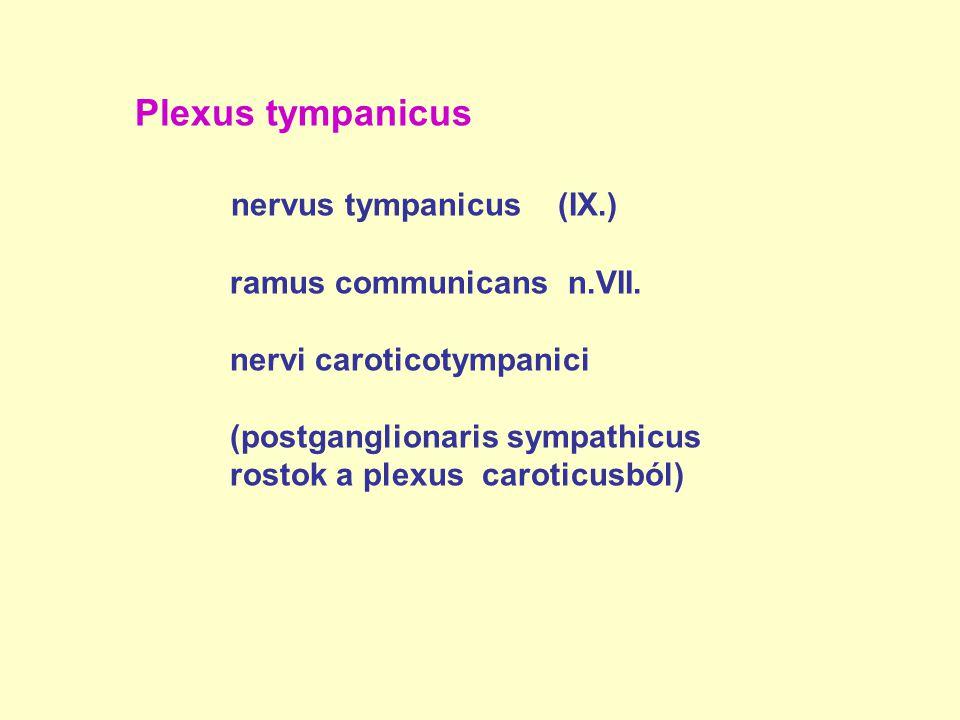 nervus tympanicus (IX.)