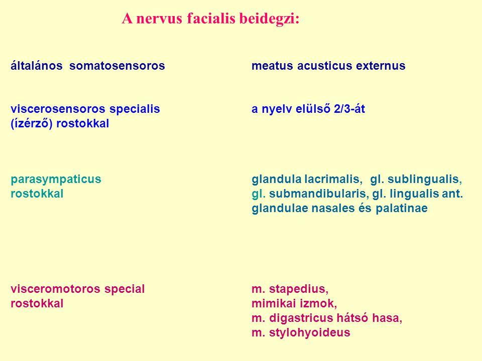 A nervus facialis beidegzi:
