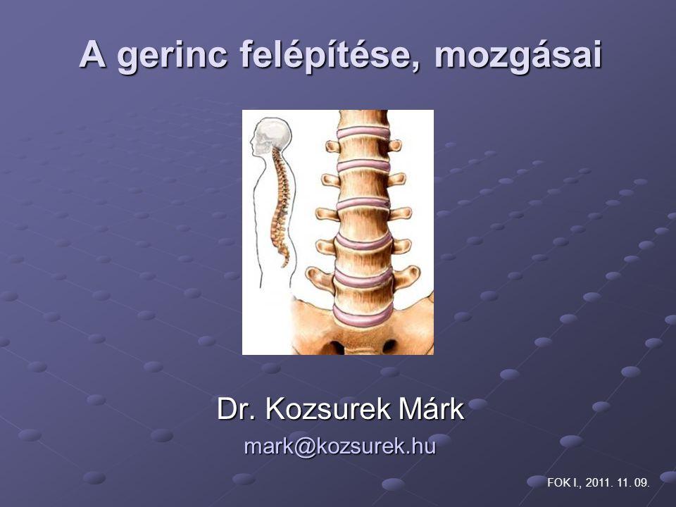 A gerinc felépítése, mozgásai