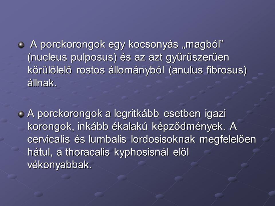 """A porckorongok egy kocsonyás """"magból (nucleus pulposus) és az azt gyűrűszerűen körülölelő rostos állományból (anulus fibrosus) állnak."""