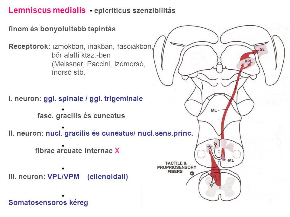 Lemniscus medialis - epicriticus szenzibilitás