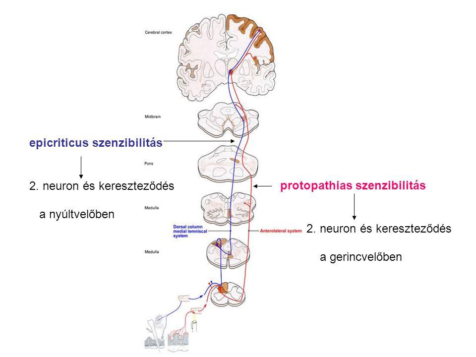 epicriticus szenzibilitás
