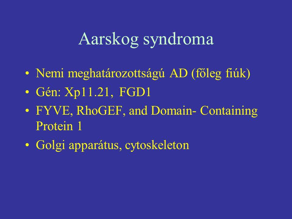 Aarskog syndroma Nemi meghatározottságú AD (főleg fiúk)