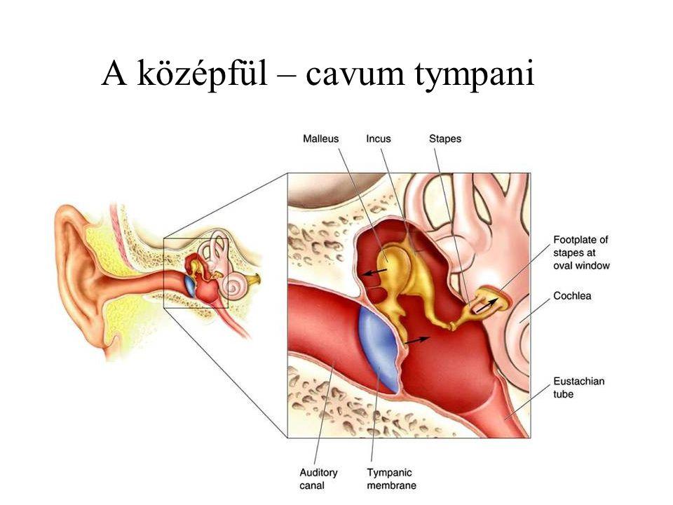 A középfül – cavum tympani