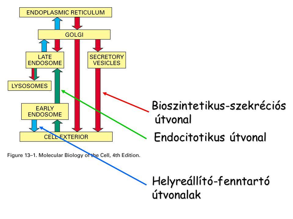 Bioszintetikus-szekréciós
