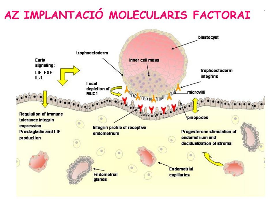 AZ IMPLANTACIÓ MOLECULARIS FACTORAI