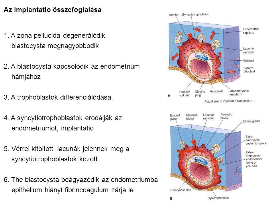 Az implantatio összefoglalása