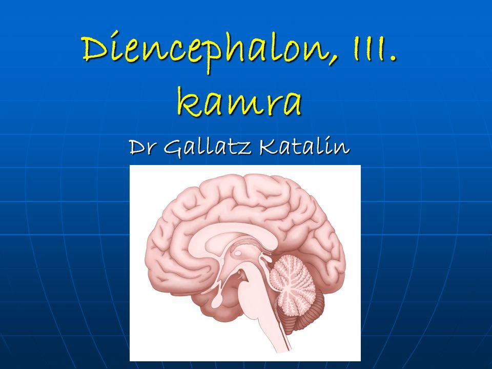 Diencephalon, III. kamra Dr Gallatz Katalin