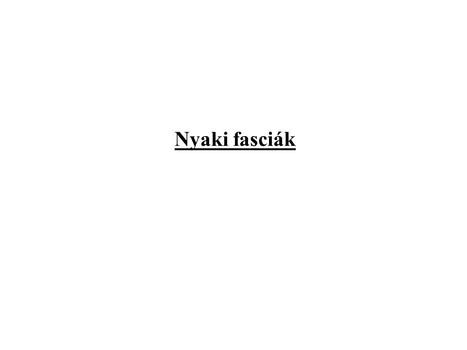 Nyaki fasciák
