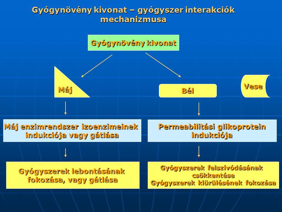 Gyógynövény kivonat – gyógyszer interakciók mechanizmusa