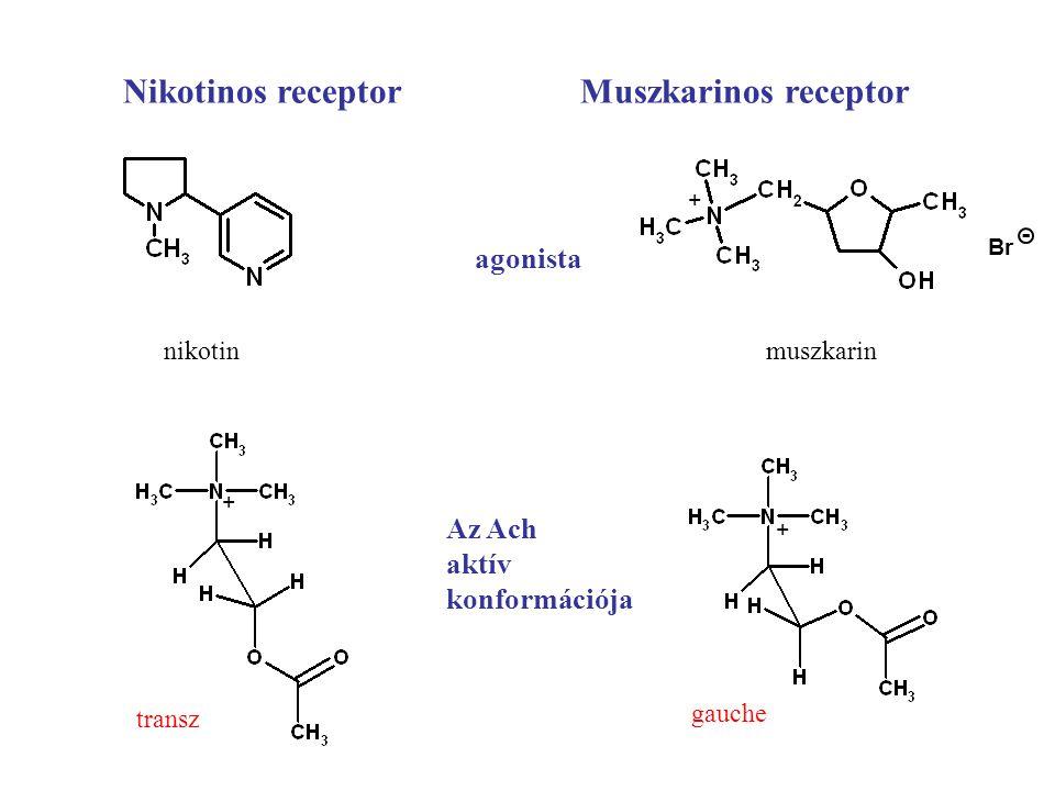Nikotinos receptor Muszkarinos receptor
