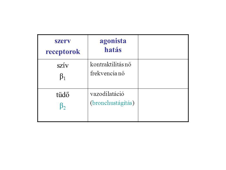 szerv receptorok agonista hatás