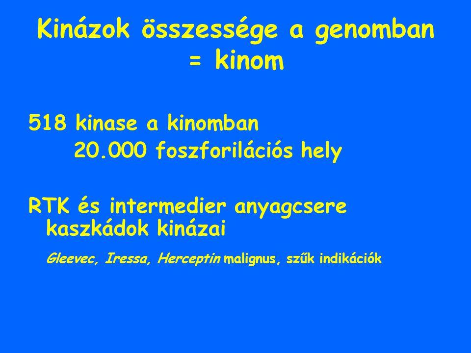 Kinázok összessége a genomban = kinom