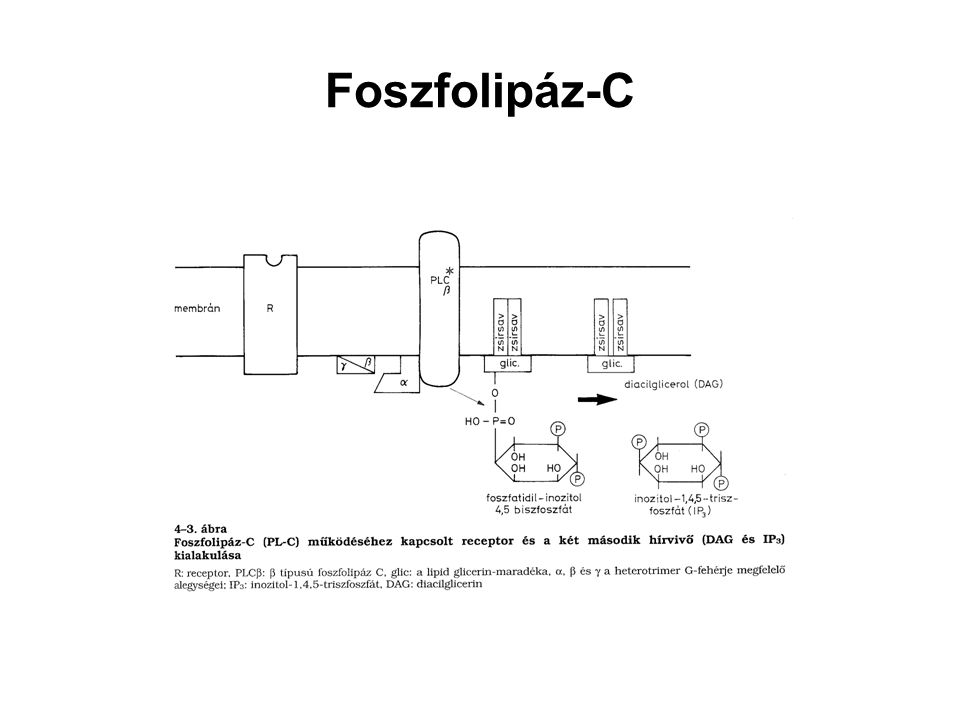Foszfolipáz-C