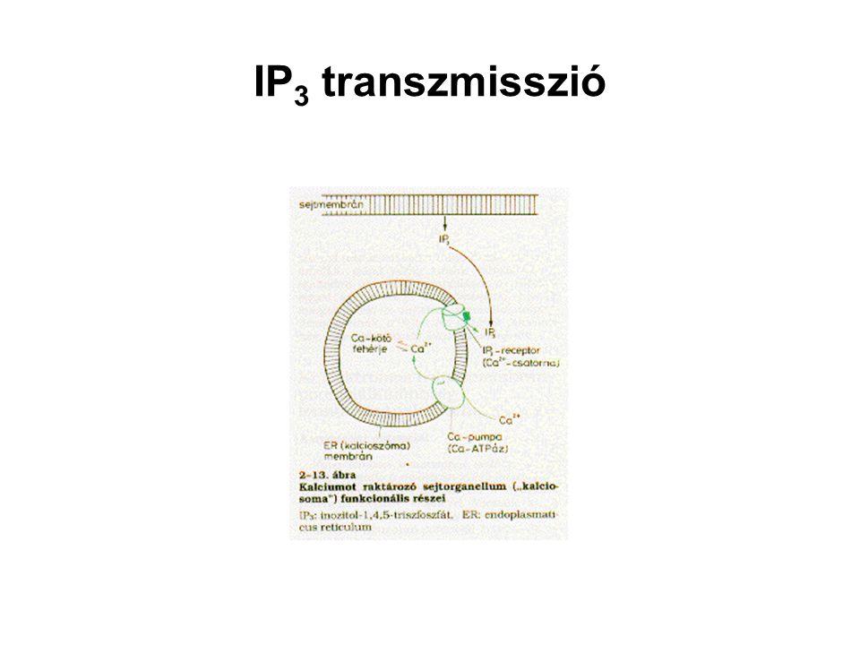 IP3 transzmisszió