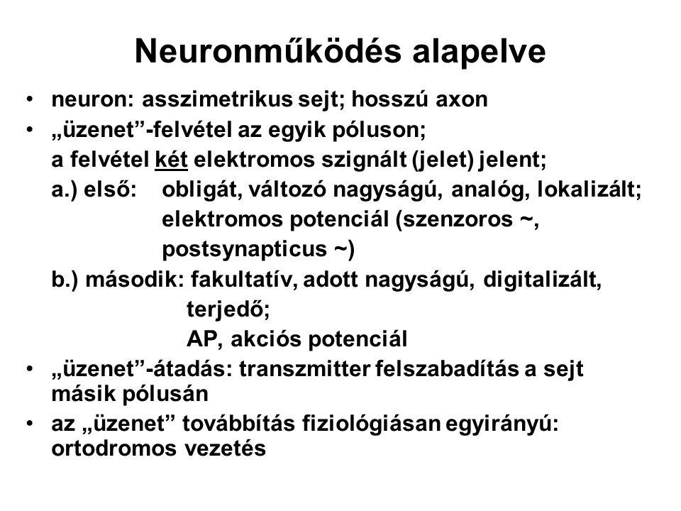 Neuronműködés alapelve
