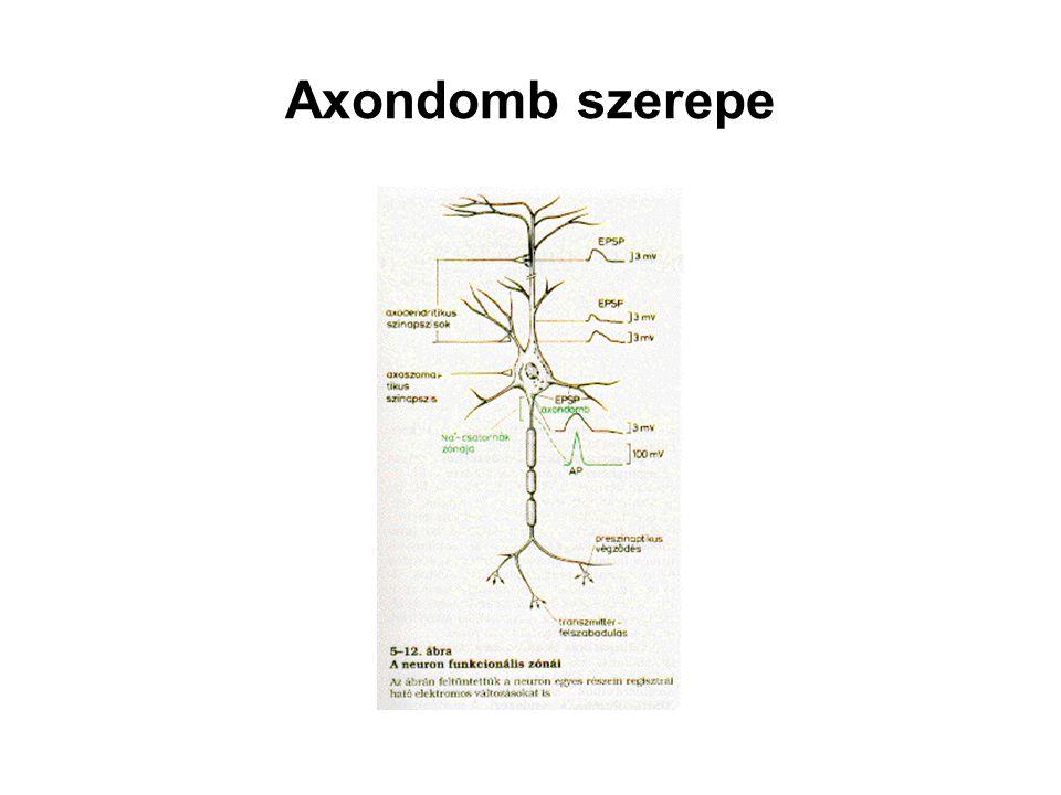 Axondomb szerepe