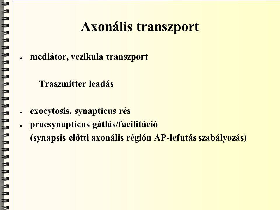 Axonális transzport mediátor, vezikula transzport Traszmitter leadás