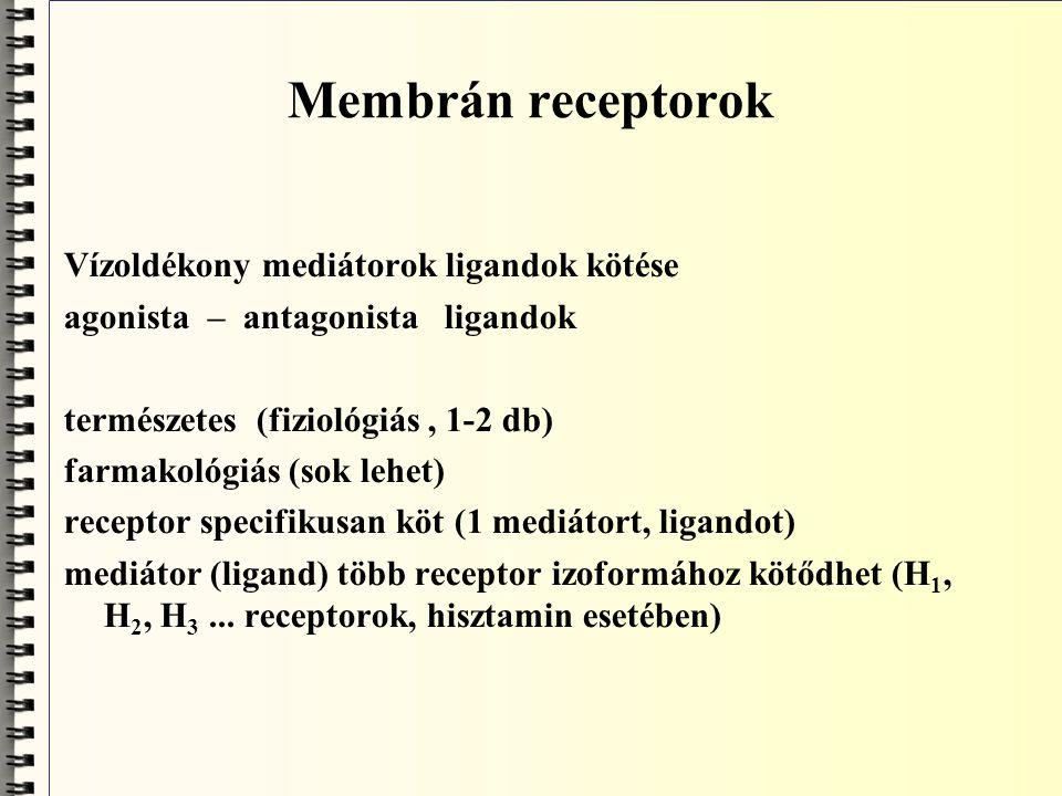 Membrán receptorok Vízoldékony mediátorok ligandok kötése