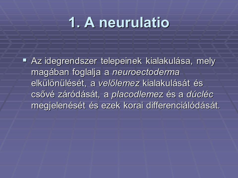 1. A neurulatio