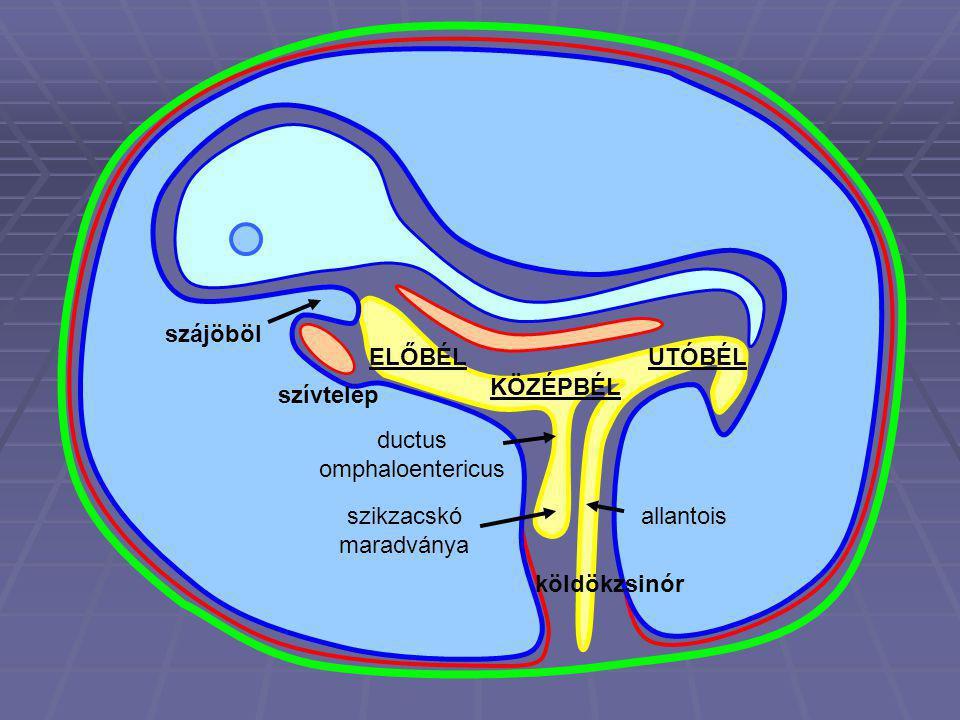 ductus omphaloentericus