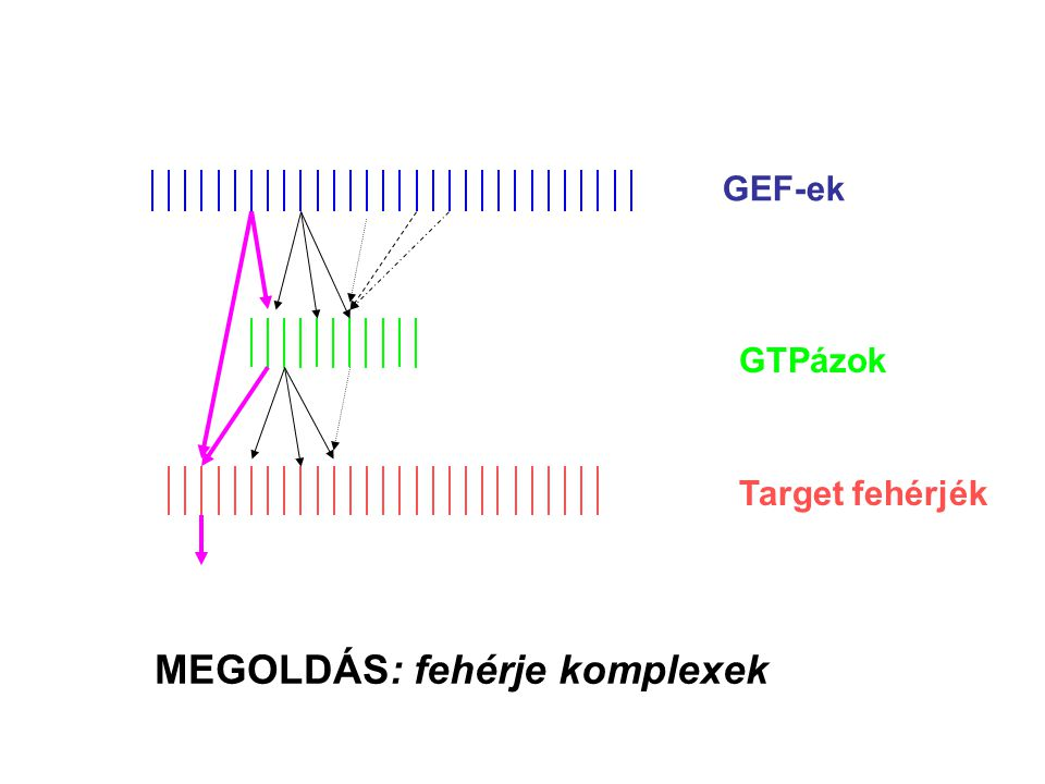 MEGOLDÁS: fehérje komplexek