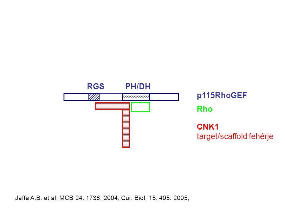 CNK1 target/scaffold fehérje