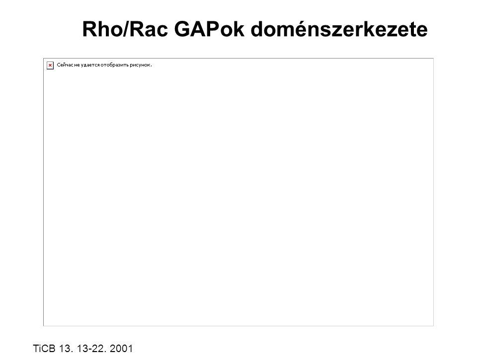 Rho/Rac GAPok doménszerkezete