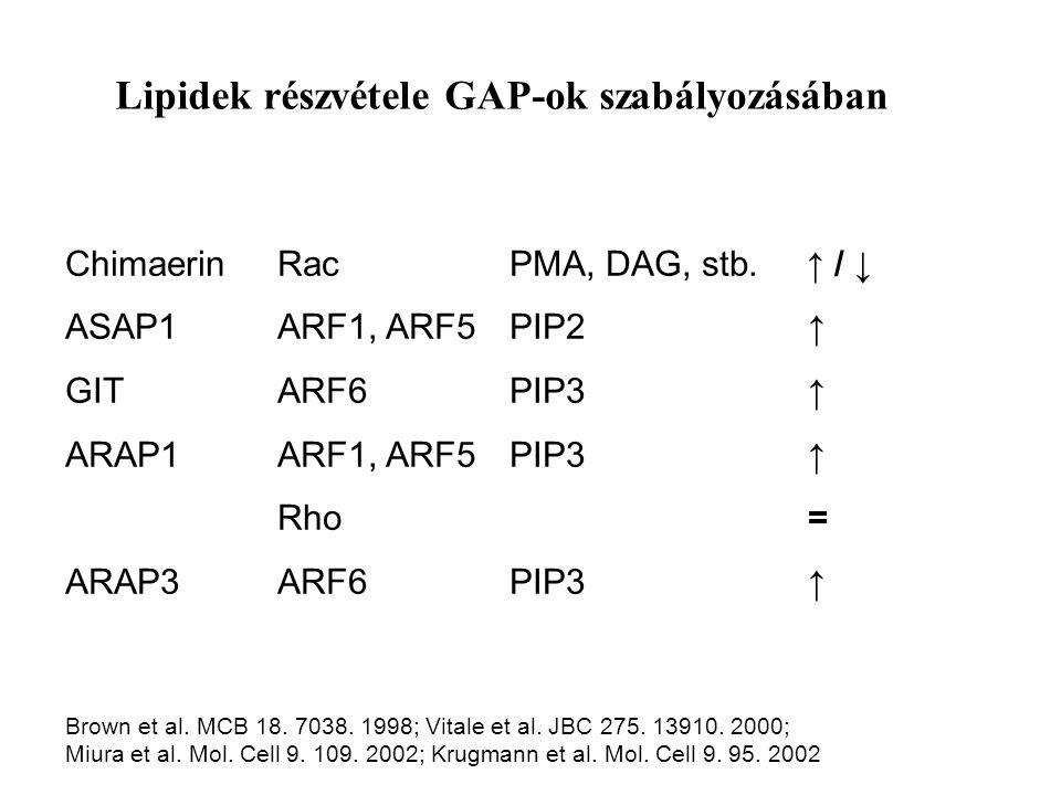 Lipidek részvétele GAP-ok szabályozásában