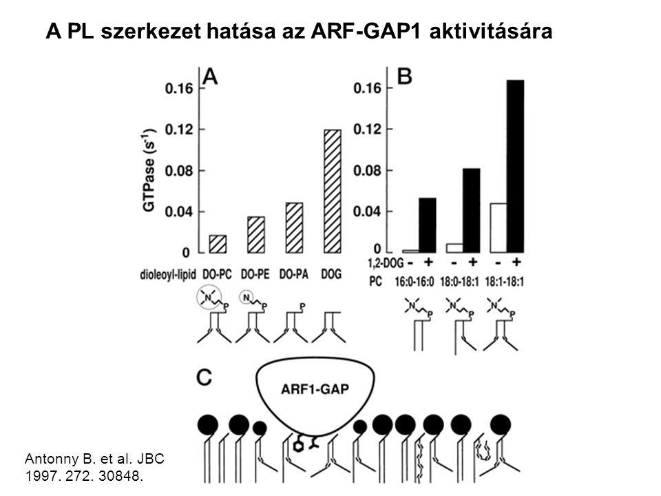 A PL szerkezet hatása az ARF-GAP1 aktivitására