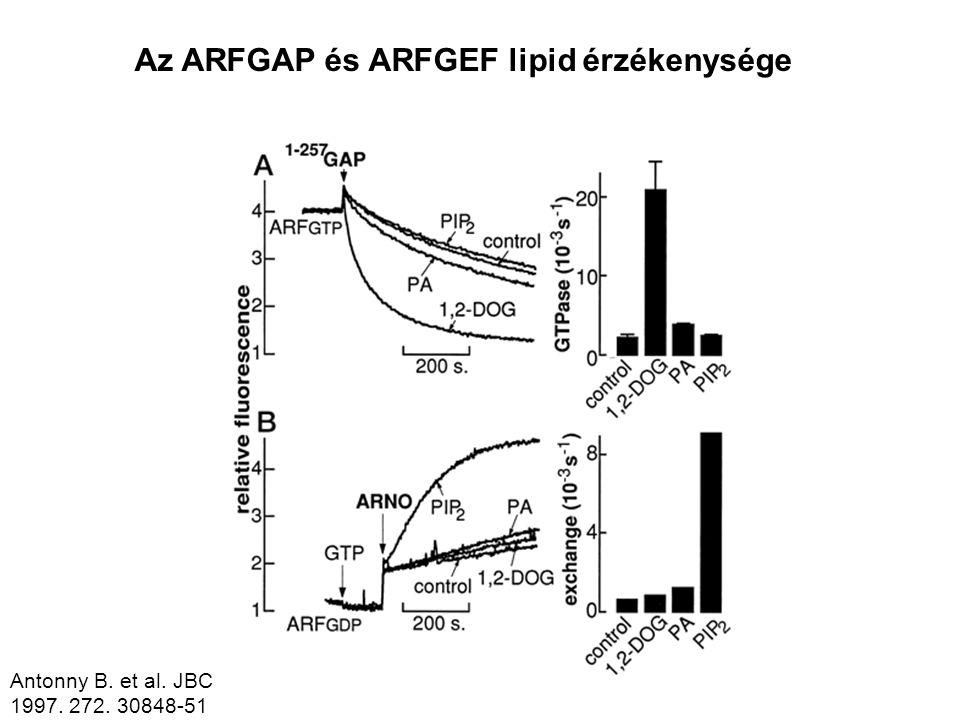 Az ARFGAP és ARFGEF lipid érzékenysége
