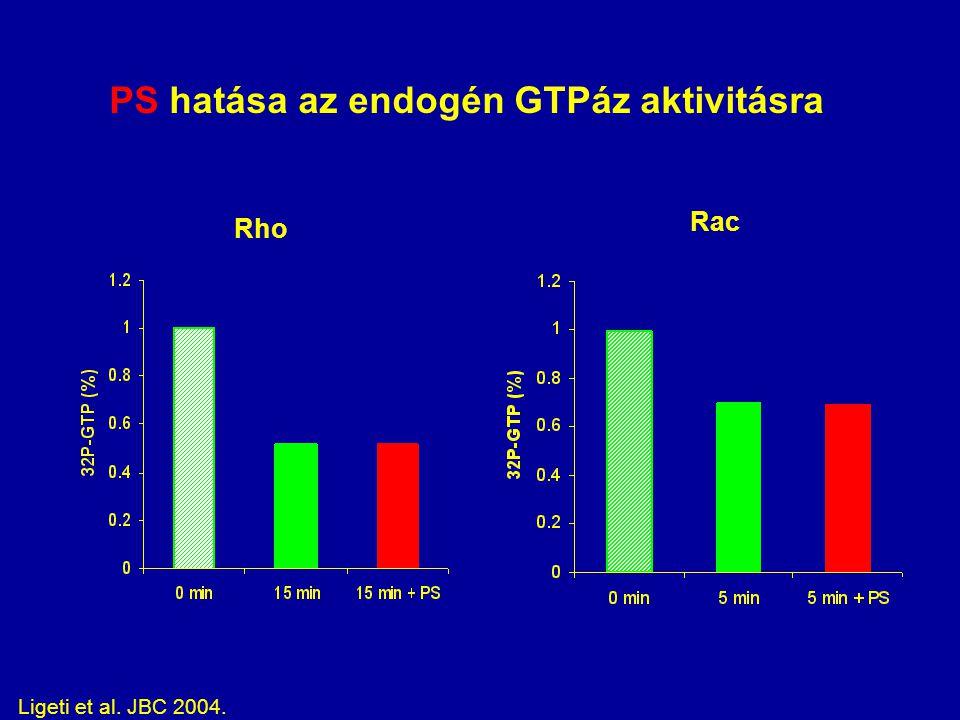 PS hatása az endogén GTPáz aktivitásra