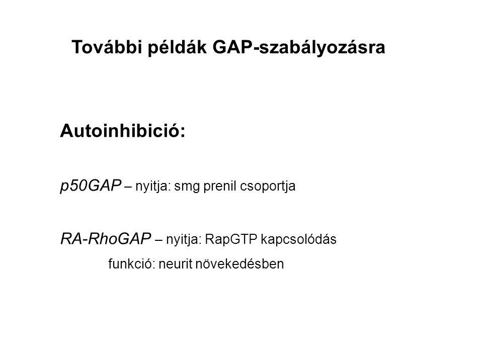További példák GAP-szabályozásra