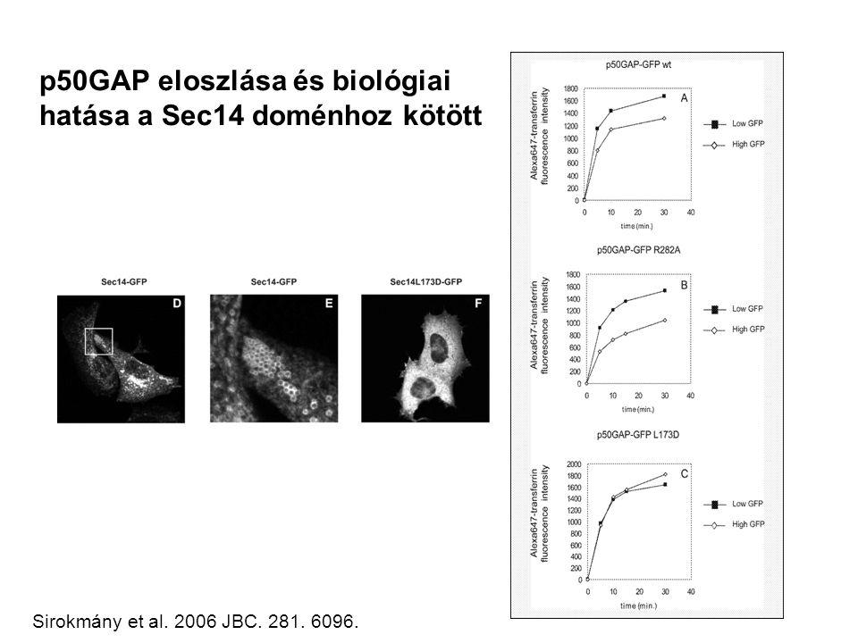 p50GAP eloszlása és biológiai hatása a Sec14 doménhoz kötött