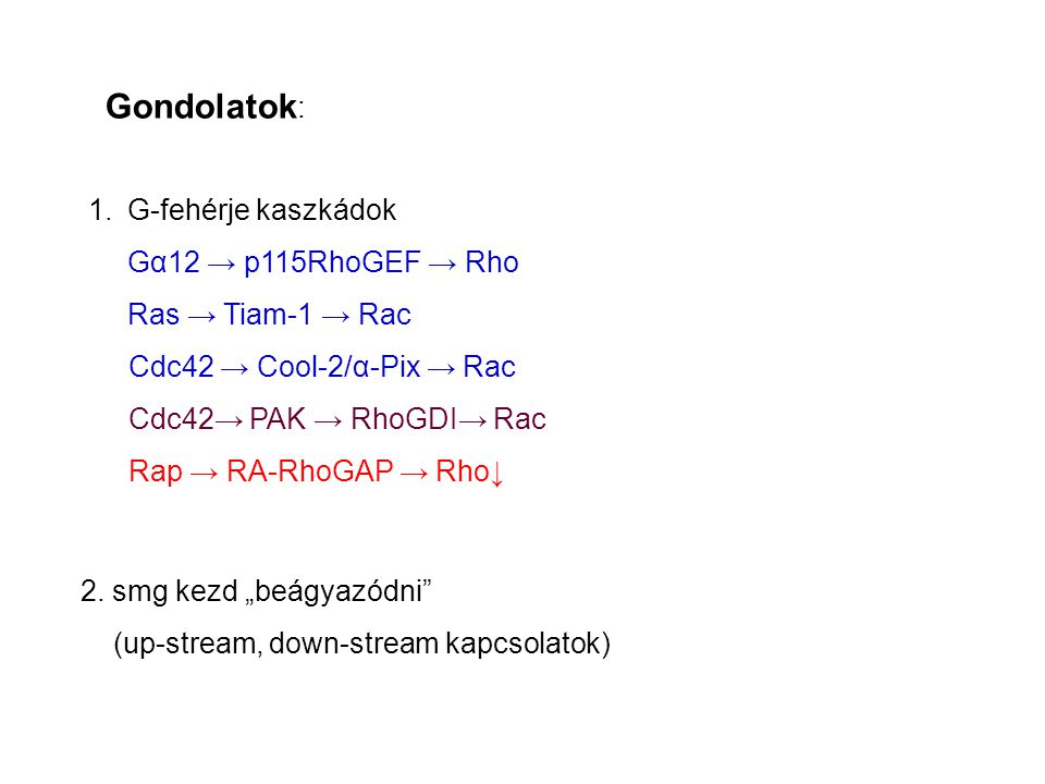 Gondolatok: G-fehérje kaszkádok Gα12 → p115RhoGEF → Rho
