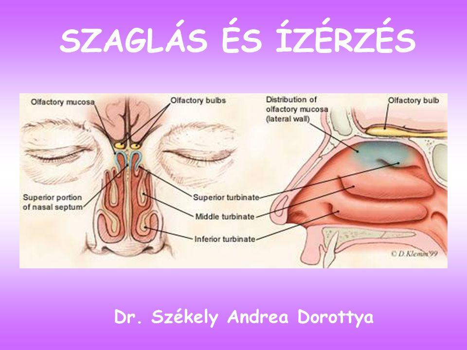 SZAGLÁS ÉS ÍZÉRZÉS Dr. Székely Andrea Dorottya