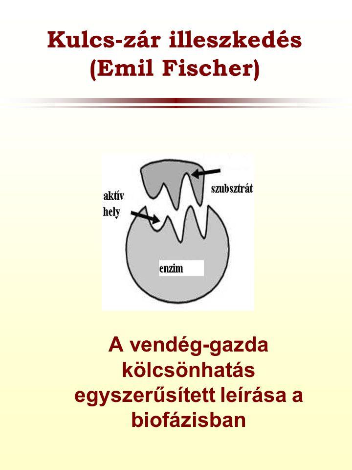 Kulcs-zár illeszkedés (Emil Fischer)