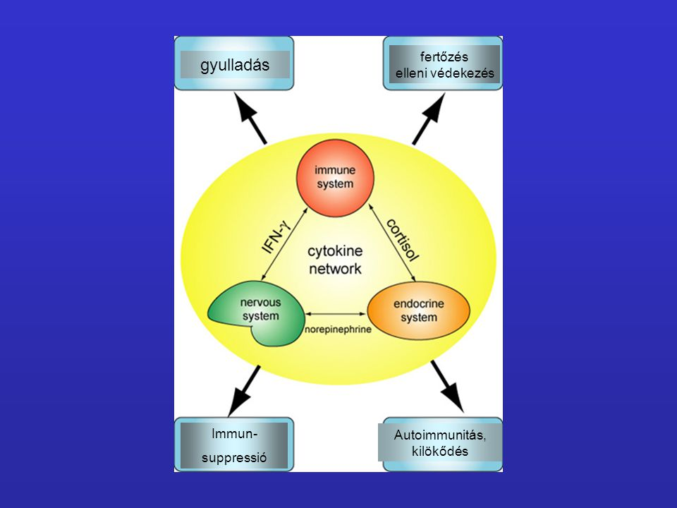 gyulladás fertőzés elleni védekezés Immun- Autoimmunitás, suppressió