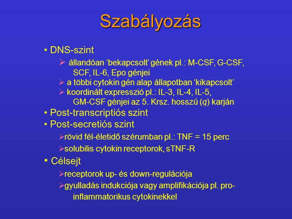 Szabályozás Célsejt DNS-szint