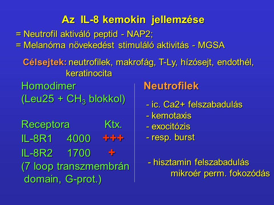 Az IL-8 kemokin jellemzése