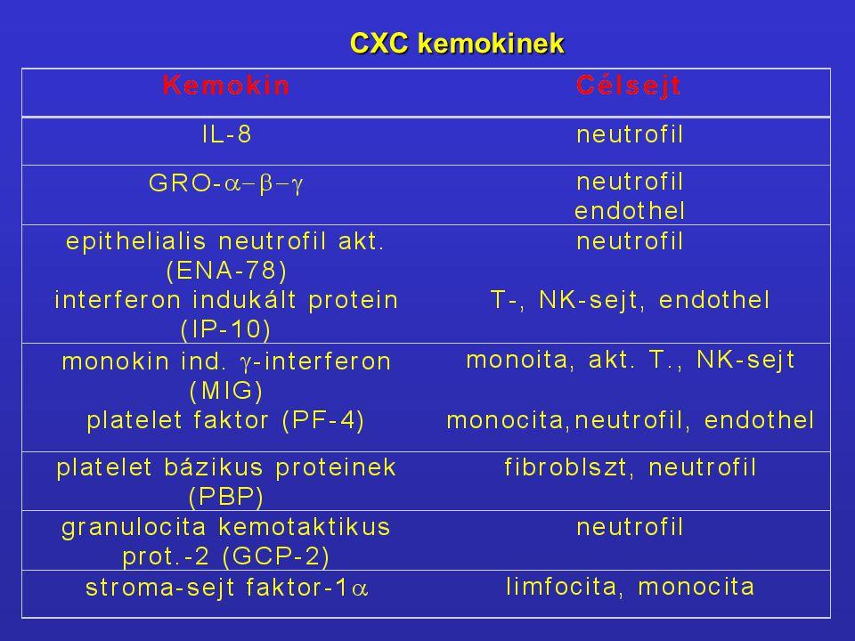 CXC kemokinek
