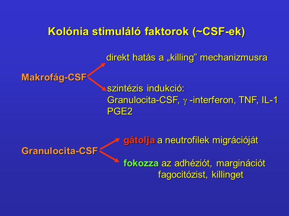 Kolónia stimuláló faktorok (~CSF-ek)