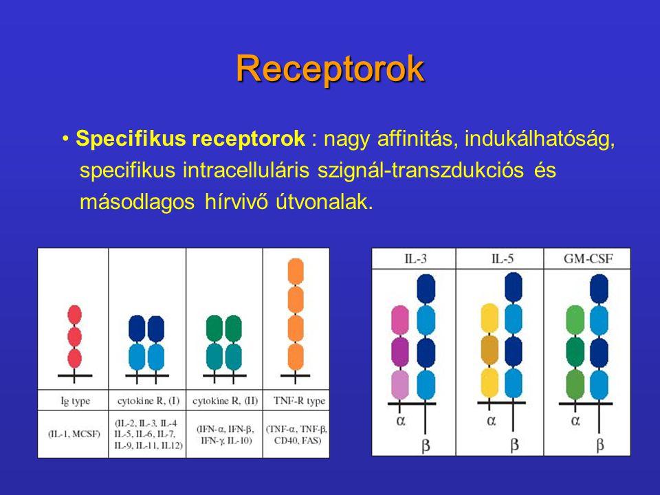 Receptorok Specifikus receptorok : nagy affinitás, indukálhatóság,