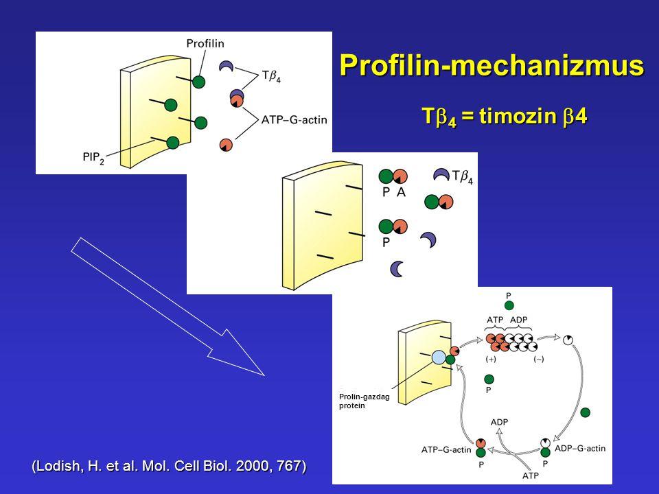 Profilin-mechanizmus