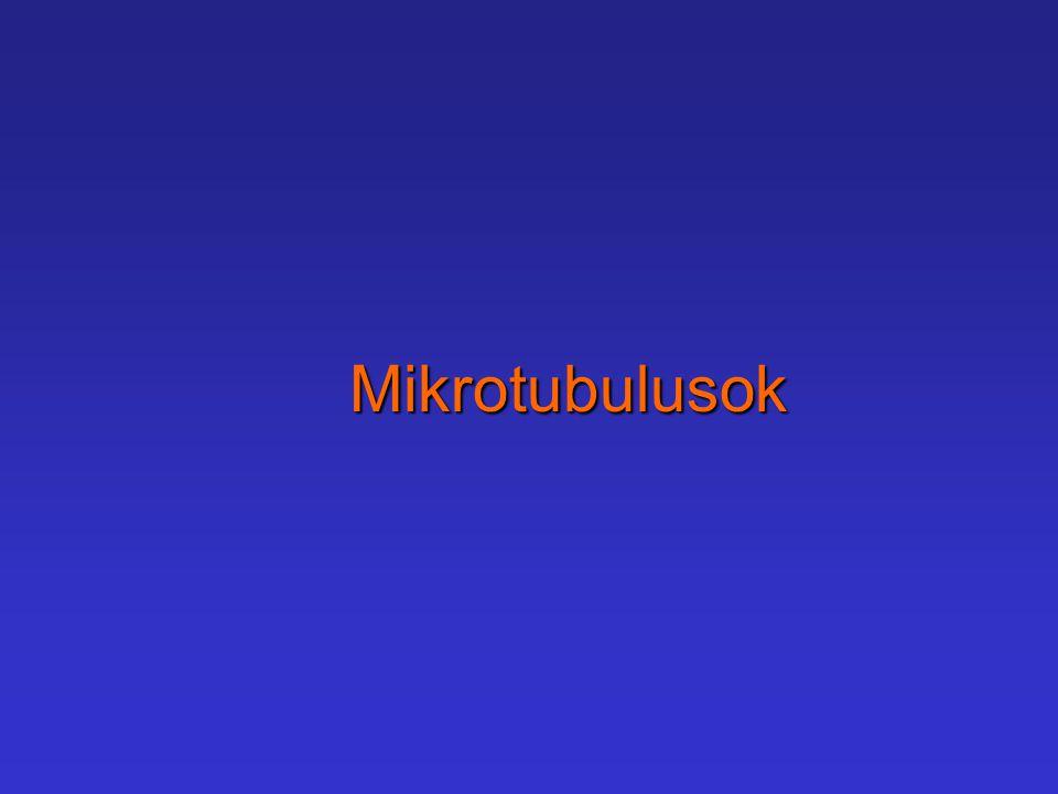 Mikrotubulusok