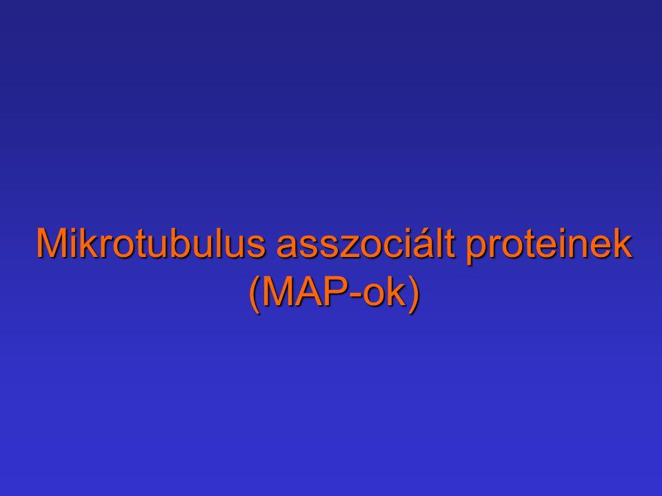 Mikrotubulus asszociált proteinek