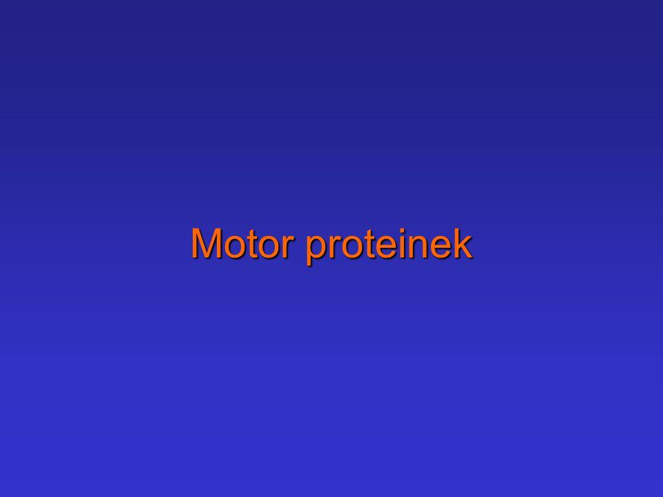 Motor proteinek