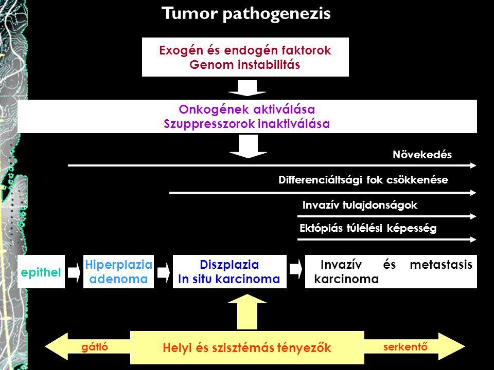 Tumor pathogenezis Exogén és endogén faktorok Genom instabilitás